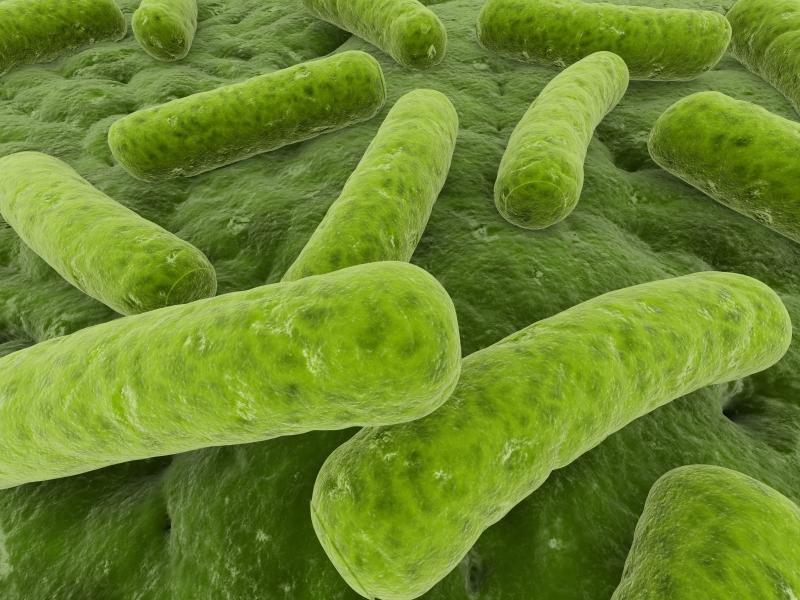 Legionela analisis