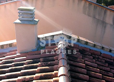 Pinxos anti-palomas y gavinas